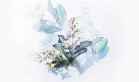 evie-shaffer-501641-unsplash